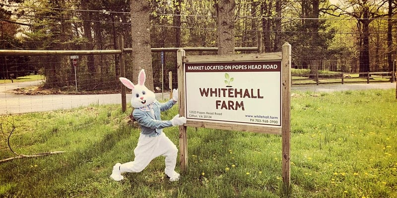 dc area family spring events whitehall farm