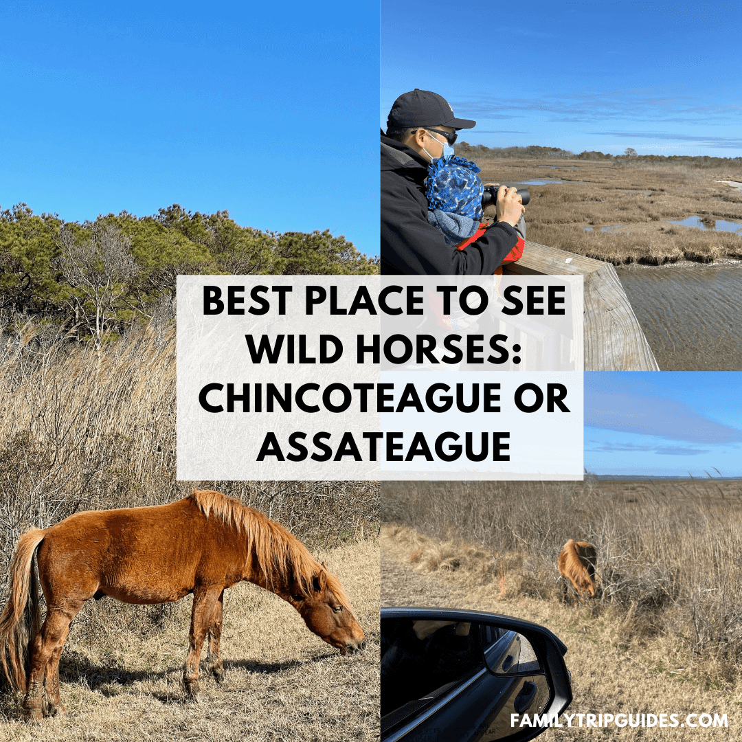 Chincoteague or Assateague Best Spot to see wild horses